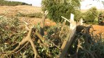 olive20120816_5