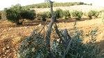 olive20120816_6